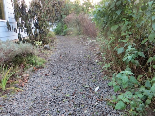 looking south: path weeded
