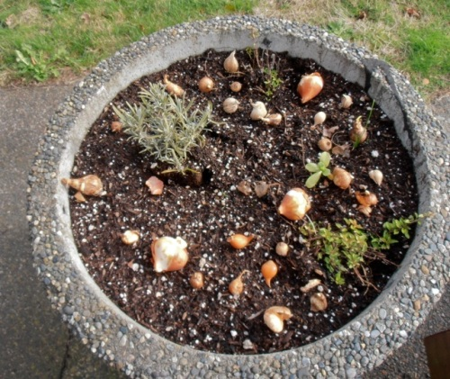 bulbs for the post office planter