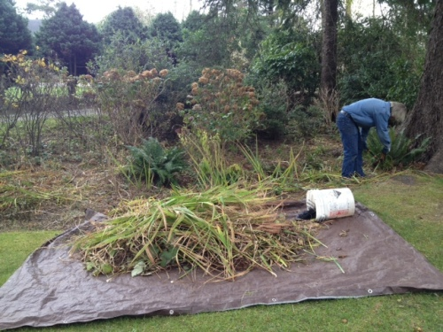 at work in the swale clipping daylily and iris foliage