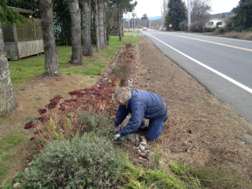 Allan clipped back perennials along the road.