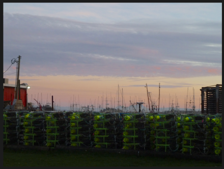 crab pots by Jessie's Fish Company