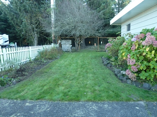 We always run out of steam in the fall before cutting down the annoying clump of asters at the very south end of the picket fence.