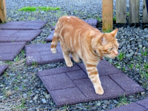 Allan's photo.  The owners have separate quarters, so  this may be their cat.