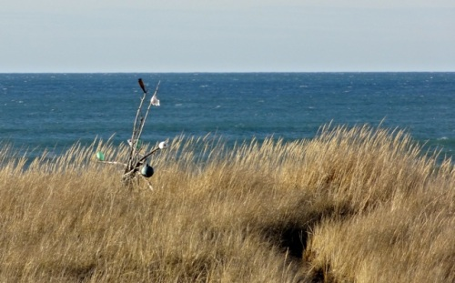 Allan's photo: beach trail marker (so guests can find their way back)