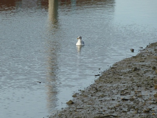 and a gull