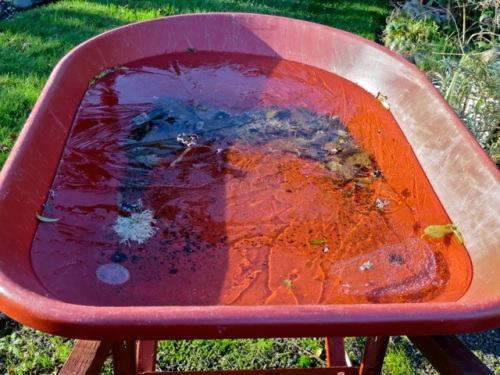 in the li'l red wheelbarrow...