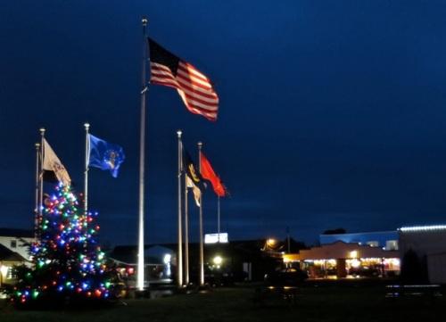 Allan's photo:  The Long Beach tree in Veterans Field