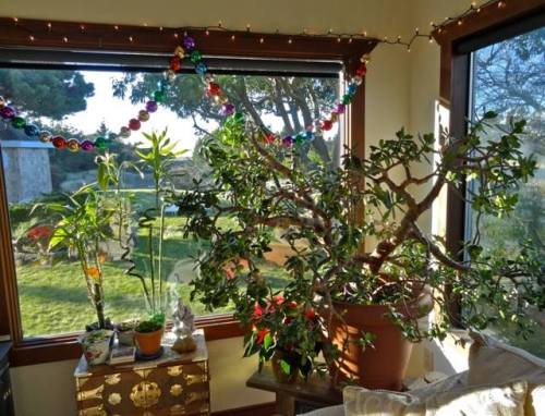 Susie's jade plant.  To the right, outside, you can see the hot tub enclosure.