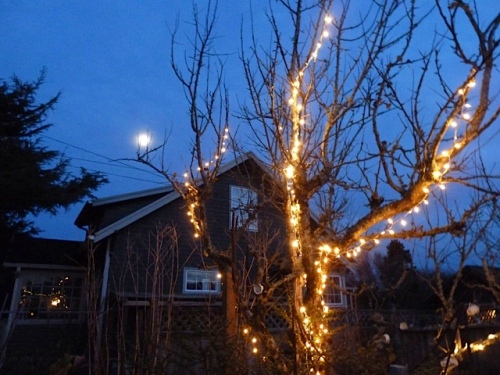 and the moon with our old lighted apple tree