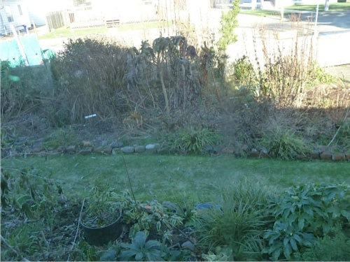 The front garden is in heavy shadow all day now; even our very low house blocks the winter sunlight.