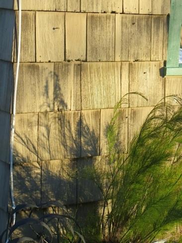 rustia shadows