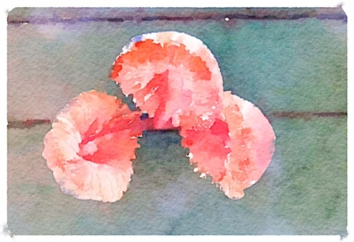 and given the Waterlogue treatment