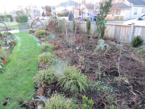 and after removing old stems and weeds