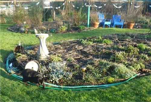 a rare sighting of Calvin in the garden