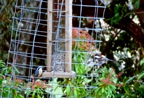 birdfeeder, Allan's photo