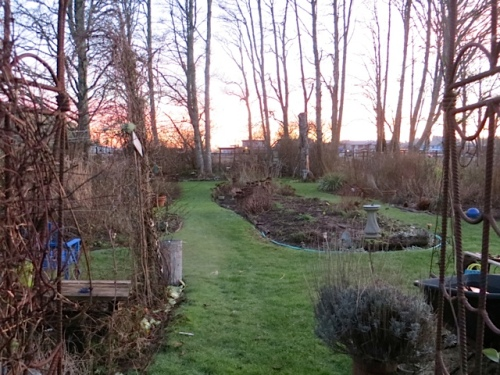 evening glow over the back garden as I return indoors