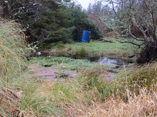 The kids' fort that had been built there last summer had blown apart and most of the boards are in the pond now.