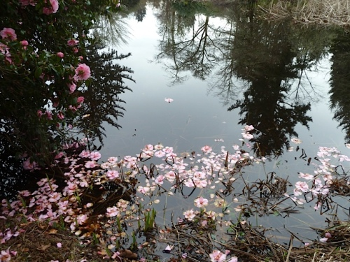 pink petals in the water