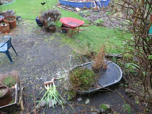 patio water gardens (and the last of the paperwhites, done)