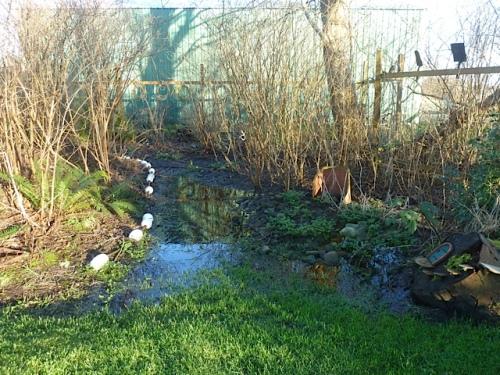 still water in the bogsy woods