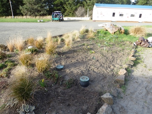 after: more room for poppies