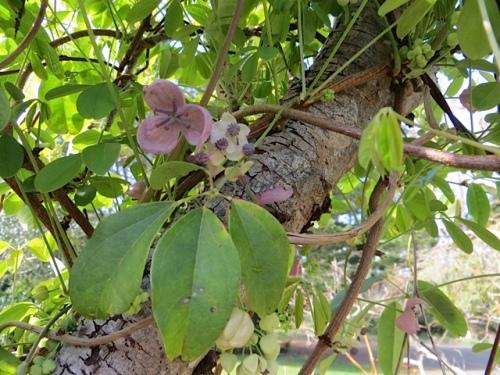 sweetly fragrant flowers