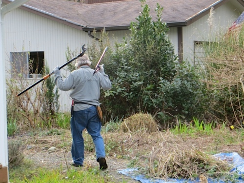 Allan approaches the laurel with implements of destruction.
