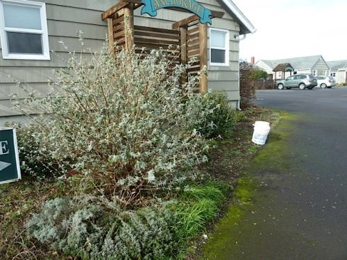 driveway entrance garden before...