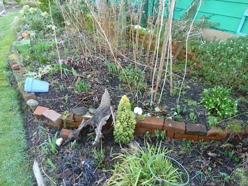 The bamboo protects my variegated Davidia.