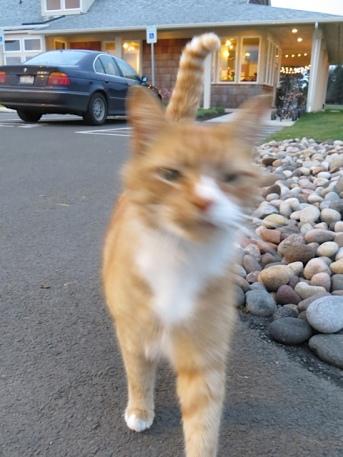 He ran up to meet us.