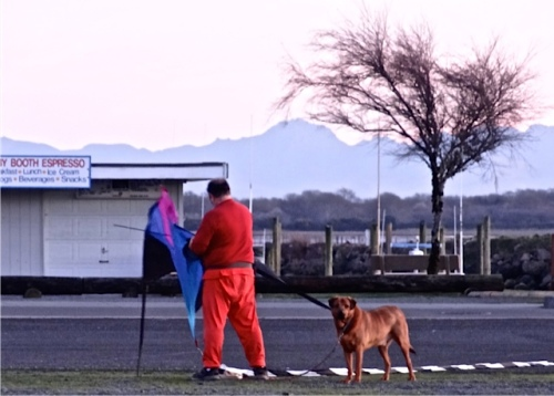 This man and his dog take a kite flying walk on many evenings.