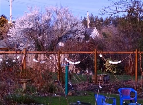 flowering tree one lot away