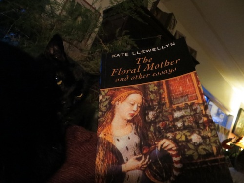 As night falls, I start a new book.