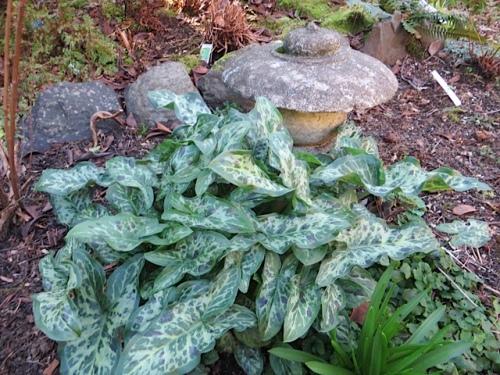 in Allan's garden