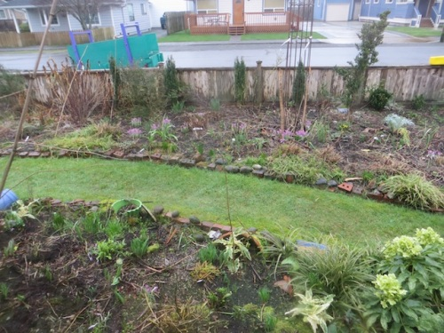 view from north window: well weeded front garden - no guilt