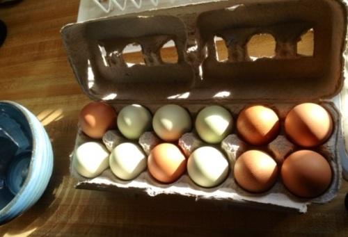 eggs from Nancy's flock