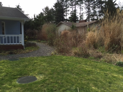 Marilyn's garden, before, looking south