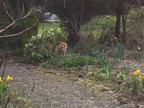 SKooter and a large hellebore