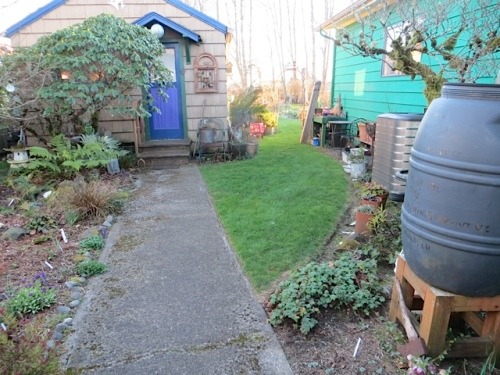 grass path toward back garden, where I SHOULD be, weeding the east edge