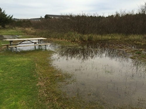 seasonal standing water on the beach approach lawn