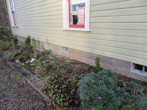 west side garden bed.  We ran out of time before picking up every last grass blade from blown-around ornamentals.