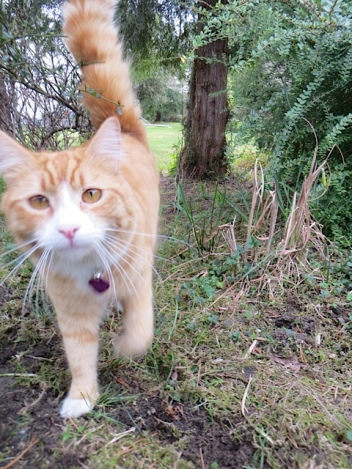 After his roll in the catmint, Skooter helped me finish weeding.