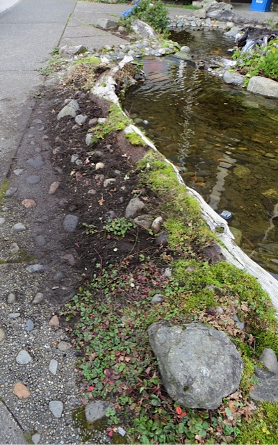 I had stripped a mat of beach strawberries off the front edge to expose the original rockwork.