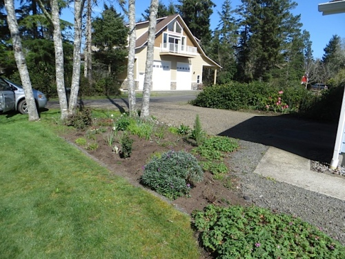after, cleared, mulched, poppy seeds in