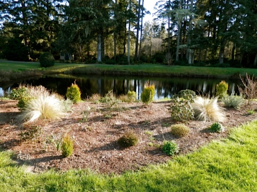newish beds to the north of the pond
