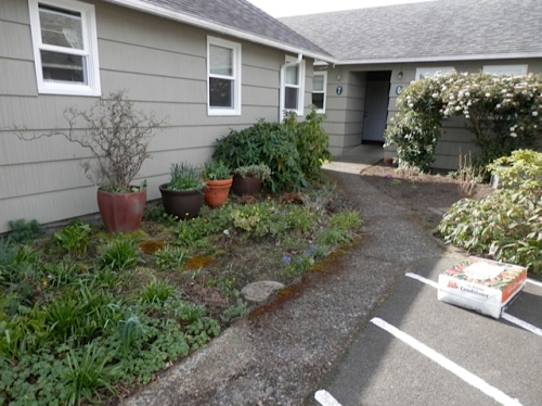 Allan went to work on the south end gardens and courtyard.  Left, a shade garden on the north wall of two of the cottages.