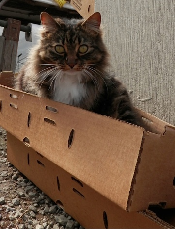 inspecting the plant boxes for sturdiness