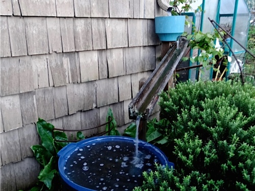 gutter water into rain barrel