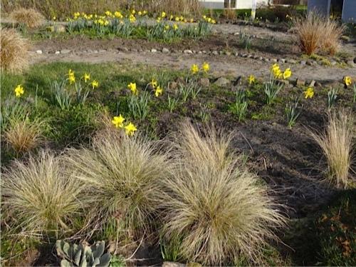 Allan's photo: west garden
