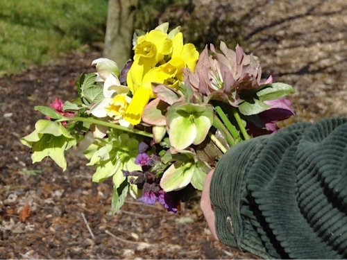 a fistful of hellebores